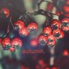 http://tritroichki.narod.ru/avatar/autumn/autumn104.png