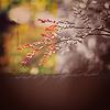 http://tritroichki.narod.ru/avatar/autumn/autumn108.png