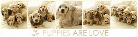 puppies are love / линеички излав